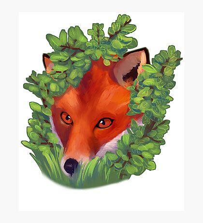 Spying Fox Photographic Print