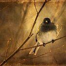 Backlit Birdie Being Buffeted by Lois  Bryan