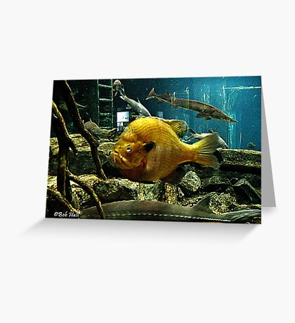 """""""May Not be a Trophy Large Mouth Bass, BUT I GOT YOUR ATTENTION!""""... prints and products Greeting Card"""