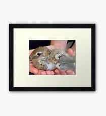 WOW!!- This Is Sooooo Comfy!! - Baby Bunny - NZ Framed Print
