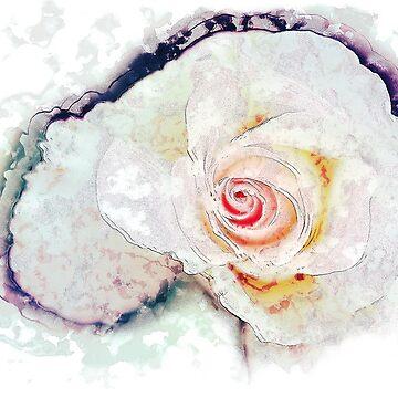 Pink Rose by waldomalan