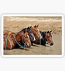 COOL WATERS & COOL HORSES Sticker