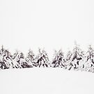 Snowy Line of Pines  by lorilee