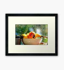I'm Singing In The Rain..!!! - Sun Conure - NZ Framed Print