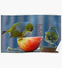Friendship! - It Takes More Than Caring...Card - Silvereye - NZ Poster