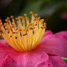 Pink by SusanAdey