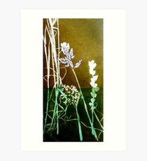 Mornington Peninsula Grasslands 6 Art Print
