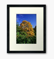 Autumns Grip - Whangarei New Zealand Framed Print