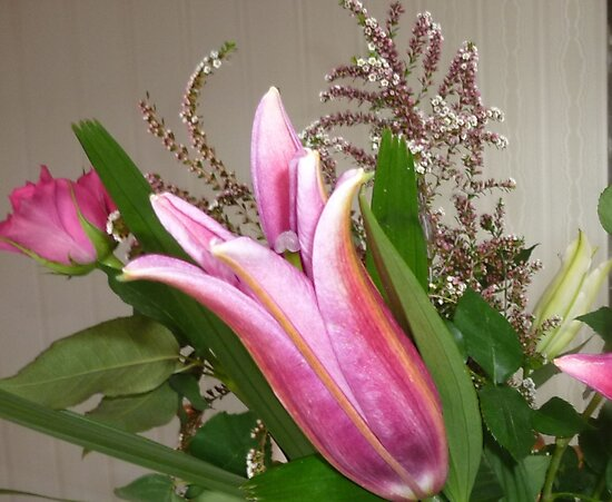 Lily Bud - still unfolding in Bouquet by EdsMum