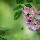 Flight of a bumble bee by Kerto Elvin