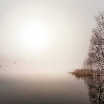 Misty flight by Kerto