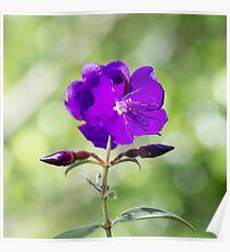 Violet ideas Poster