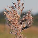 Wild Grass by Rodney Wratten