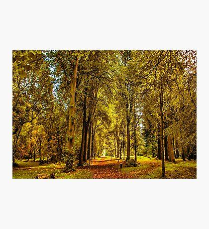 Woodland Pathway Photographic Print