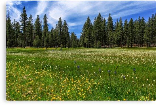 A Meadow In Lassen County by James Eddy