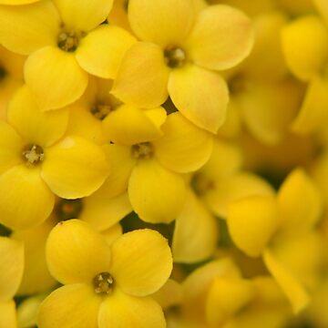Yellow by berisme