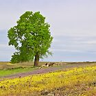 Tree and Wildflowers by John Butler