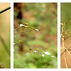 Macro Nature Triptych Green by Kathie Nichols