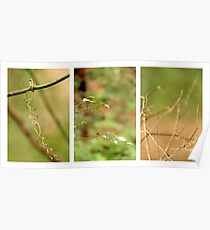Macro Nature Triptych Green Poster