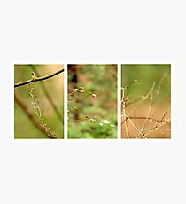 Macro Nature Triptych Green Photographic Print