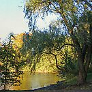 On Golden Waters, the Pocantico River  by Jane Neill-Hancock