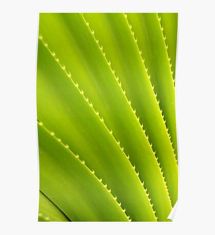 Spiky Plant Poster