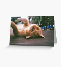 Pussy Power Greeting Card