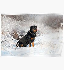 Snowy Rotty  Poster