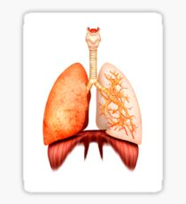 Anatomy of human respiratory system, front view. Sticker