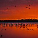 Myakka Sunset by Joe Saladino
