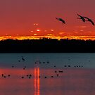Coming home to roost by Joe Saladino