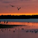 Sandhill cranes arriving to roost. by Joe Saladino