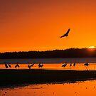 Roosting Time by Joe Saladino