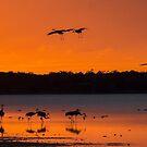 Sandhill cranes arriving by Joe Saladino