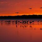 Sarasota Sunset by Joe Saladino