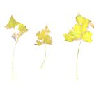 Somebody had Leaf for Lunch Trio - Yellow by Mike Solomonson