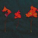 Somebody had Leaf for Lunch Trio - Red on Dark Background by Mike Solomonson