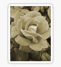 Faded Rose Sticker