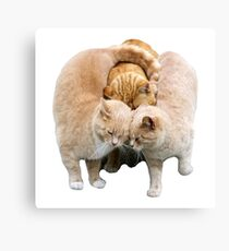 Cats Cuddling Canvas Print