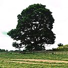 Tree at Colebrooke, Fermanagh, Northern Ireland by Shulie1