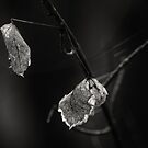 Winter Leaves by JeniNagy
