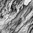 Bark by Thaddeus Zajdowicz