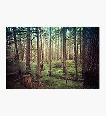Forest Trees - Tree Woods Green Nature Outdoor Adventure Photographic Print