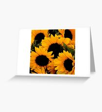 Santa Barbara Sunflowers (2006) Greeting Card