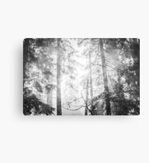 Forest Trees - Black and White Magical Woods Canvas Print