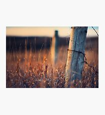 The Morning Grass Photographic Print