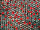 Poppy Day Fence by Yampimon