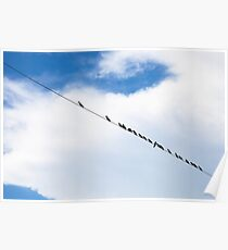 Birds hanging on a wire Poster