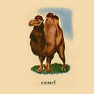 C is for Camel by dickybow