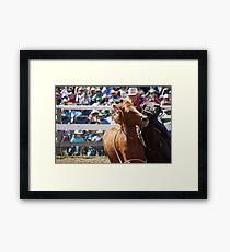 Mary Williams - Brumby Catch Framed Print